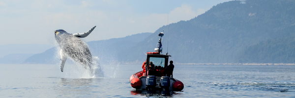 Perfect Pairings: Whale Watching in the Saguenay-St. Lawrence Marine Park